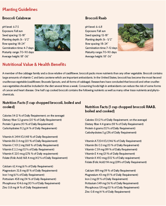 Broccoli Planting Instructions and Nutritional Information (Survival Seed Gardening)