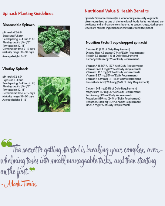 Spinach Planting Guidelines and Nutritional Information (Survival Seeds Gardening)